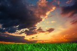 Green grass under dark blue and orange sky