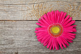 Gerbera flower over wooden table