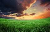 Green field under orange sky