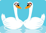 funny swans in love