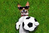 funny  german soccer dog