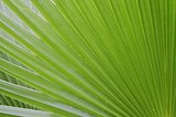 Palm Green Leaf Background