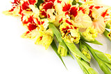Red and yellow bright colorful gladiolus \ horizontal \ isolated
