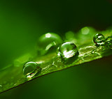 Water drops green abstract