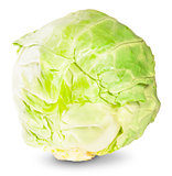 Green Fresh Cabbage