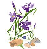 Hand drawn Iris blooms