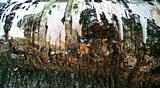 Birch Tree Bark