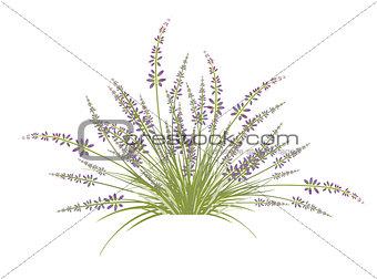 Lavender Flower Bush