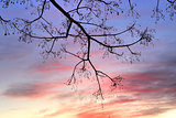 Winter Sunset and tree