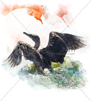 Watercolor Image Of  Double-crested Cormorant