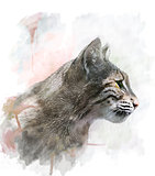 Watercolor Image Of  Bobcat