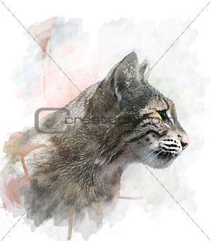 Watercolor Image Of  Bobcat