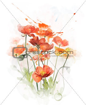 Watercolor Image Of  Red Poppy Flowers