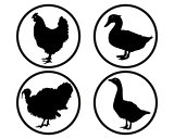 round buttons with silhouettes of poultry