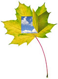 maple leaf with window and blue sky