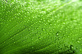 water drops on green plant leaf