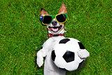 funny brazil  soccer dog
