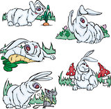 Funny gray rabbits
