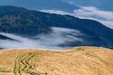 Ruts in the Carpathian mountains