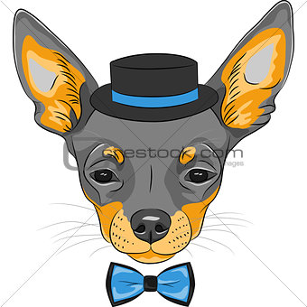 vector cartoon hipster dog Chihuahua breed