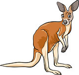 kangaroo animal cartoon illustration