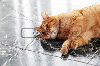 Cute cat on the floor
