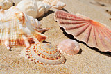 seashells on the sand of a beach