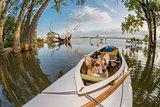 canoe dog