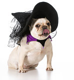 dog dressed like a witch