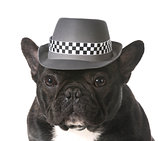 dog wearing fedora