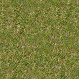 Green and Dry Grass. Seamless Texture.