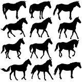 Set vector silhouette of horse