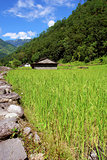 Rice fields and freshwate. Himalayan landscape