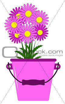 daisies in bucket