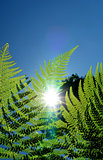Fern leaf detail in sunlight background
