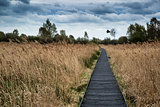 Stormy sky landscape over wetlands in countryside with boardwalk