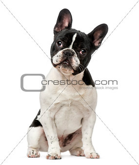 French Bulldog puppy (6 months old)