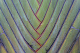 Tropical green palm tree background macro