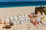Conchs and seashells for sale on a beach