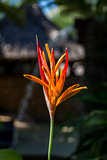 Colorful orange tropical strelitzia flowers