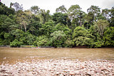 Stony river bed in a lush green jungle