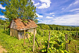 Mud cottage in hill vineyard