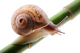 Snail on a green bamboo stem