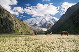 Kyrgyzstan near Karakol