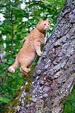 Red cat is on the trunk of a tree