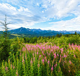 Summer morning mountain landscape with pink flowers  (Poland)