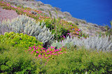 diverse vegetation on fertile soil, santorini