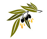 Black olives on a branch dripping olive oil