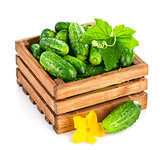 Fresh cucumber in wooden box with green leaf and flower