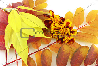 Abstract background with color autumn leaves and flower